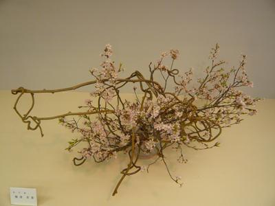 100401桜.jpg