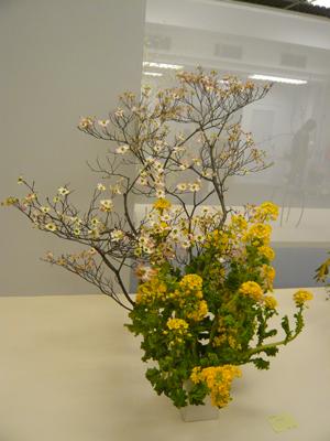 100414菜の花.jpg