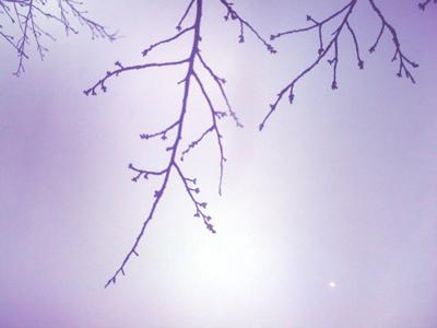110314桜.jpg